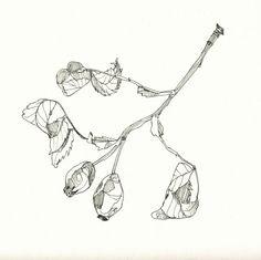 rosebud / pendrawing