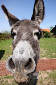 Beauty Donkey ! :)