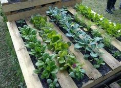 Tarimas para sembrar! Muy buena idea!