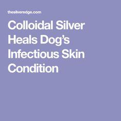 Colloidal Silver Heals Dog's Infectious Skin Condition