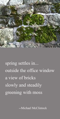 Tanka poem: spring settles in-- by Michael McClintock. What Is Poetry, My Poetry, Poetry Quotes, Japanese Poem, Famous Poets, American Poets, Haiku, Poems, Image Search