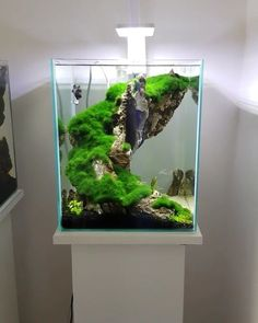 planted fish tank Planted fish tankYou can find Fish tank and more on our website Betta Aquarium, Planted Aquarium, Betta Fish Tank, Aquarium Aquascape, Fish Tanks, Plant Fish Tank, Planted Betta Tank, Fish Tank Terrarium, Aquarium Terrarium