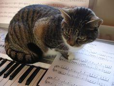 my_cat_plays_piano_by_indigo_inspiration.jpg (2592×1944)