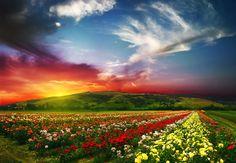 Mirad las maravillas y bellezas de la naturaleza. Pensad en su magnìfica adaptaciòn a las necesidades y a la felicidad, no sòlo del hombre, sino de todas las criaturas vivientes. El sol y la lluvia que alegran y refrescan la tierra, los montes, los mares y klos valles, todos no hablan del amor del Creador. Dios es el que suple las necesidades cotidianas de todas sus criaturas. (El Camino a Cristo, pag. 9)