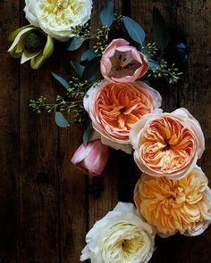 Blumenwiese Englisch pureblyss fawndeviney fawn deviney for dogwood floral