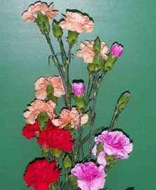 Clavel Dianthus Caryophyllus, Mini Carnations, Flower Identification, Cut Flowers, Flower Power, Glass Vase, Plants, Base, Decor