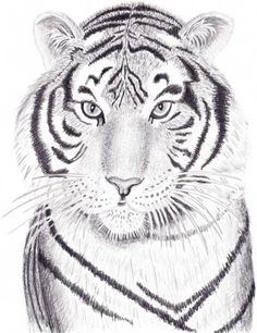 How to Draw a Tiger with Graphite Pencils