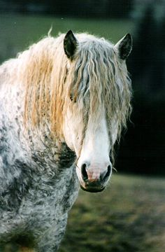 Bashkir Curly Horse - comes in all sizes, colors, and body types but all carry a gene for a unique curly coat of hair.