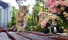 pisica din spatele blocului