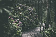 Haagan Alppiruusupuisto Helsinki, Traveling, Plants, Outdoor, Outdoors, Viajes, Planters, Outdoor Games, Outdoor Living