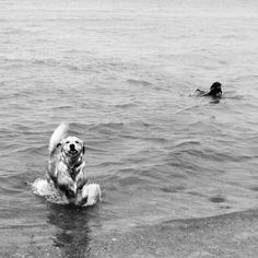Mille playing with Friend on the beach