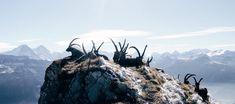 Good Hiking In Interlaken – Day Tours Top 5 – Switzerland North Country, Day Tours, Switzerland, Mount Everest, Hiking, Mountains, Travel, Voyage, Trips