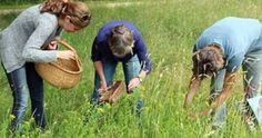 Te veel onkruid in je tuin? Gooi het niet weg, eet het lekker op! Paardenbloem