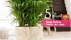 Tai_FotoArticulo Diy And Crafts, Cactus, Planter Pots, Sweet Home, Herbs, Cool Stuff, Plants, Home Decor, Terrace
