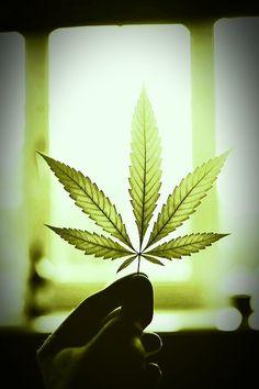 Resultado de imagen de marihuana tumblr