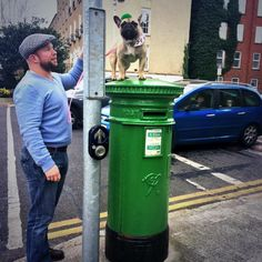 Mia's on top of the postal service  #HappyStPatricksDay #frenchielife  pic.twitter.com/MefjLKyMFK