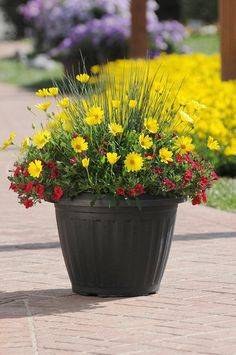 Must do more container gardening.