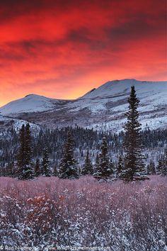 Sunrise in Denali National Park, Alaska - photo by Ron Niebrugge