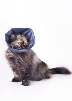 Colar Confortinho: também para gatos
