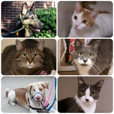 Cats or dogs! Who do you like more?