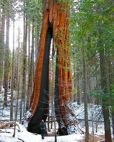 California Redwoods in the winter - Wanderlust - Explore - Hiking - Forest Walks