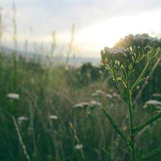 Letná pondelková príroda. 🌿🌱⛅ #pozrinablog #tamjepekne #záhrada #mojedetstvo #nature #slovakia #green #hill #sky #monday #insta_svk #slovakblogger #sunset #purenature