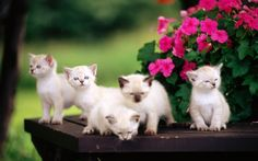 1920x1200 Wallpaper cat, cats, table, animal, flowers, baby, kittens