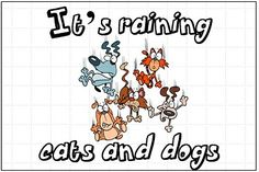it's raining cats and dogs saying - Google Search