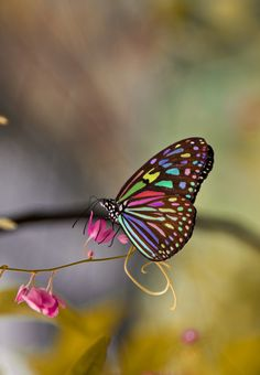 Colorful butterfly by Younis Mohammed on 500px