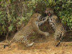 Wildlife Photographer of the Year 2013 (© Greg du Toit/Wildlife Photographer of the Year 2013)