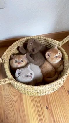 Cute Little Kittens, Cute Baby Cats, Kittens Cutest, Baby Pets, Baby Animals Super Cute, Cute Little Animals, Cute Funny Animals, Puppies And Kitties, Funny Cats And Dogs