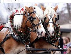 Lebanon Horse Parade