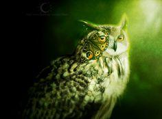 Butterfly / Owl