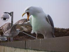 Animals in De Koog, Netherlands - a photo by sarena