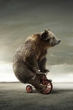 It is a bear…………on a tricycle!! :-D