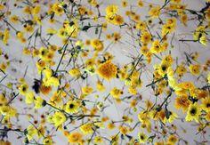 L'Enthousiasme floral de Rebecca Louise Law (4)