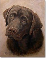 Chocolate Lab, Labrador Retriever. Artwork by Amy Reges.