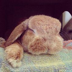 Sleepy Bunny ... lil Rambo... RIP ♥♥♥