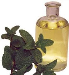 How To Make Your Own Peppermint Essential Oil