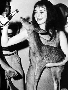 Audrey Hepburn & her pet deer