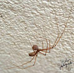 Araignée femelle et ses œufs