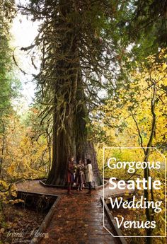 Wedding venues in The Pacific Northwest. Mount Ranier elopement. Seattle area outdoor weddings.  http://www.traciehowe.com/mount-rainier-elopement-photography-terra-dominique/