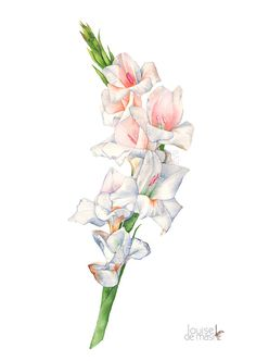 Gladiolus watercolour painting print G17117 A3 by LouiseDeMasi