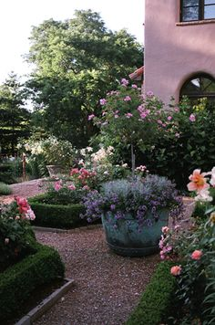 Small gravel courtyard, boxwood borders, planter and roses.