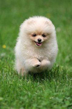 More pom <3! so cute!
