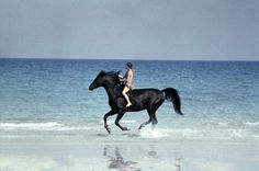This if the horse from the movie the black stallion. I rode a horse once that tried out for that role but he was too young and wild at the time. So gorgeous!