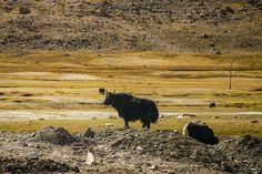 Tso Ltak - the unexplored lake of Ladakh