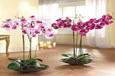 Orchids with beautiful flowers in various colors are wonderful house plants for elegant and sophisticated home decorating Indoor Orchids, Indoor Flowering Plants, Orchids Garden, Artificial Orchids, Orchid Flower Arrangements, Orchid Centerpieces, Orchid Pot, Orchid Plants, Phalaenopsis Orchid