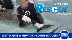 Rescue-Clearwater brings you the second in a series of 3 new special edition episodes of Winter the dolphin's amazing story. You don't want to miss the incredible story of one little dolphin calf that loses her tail, survives against all odds & goes on to inspire millions! Watch Winter's story right here in Rescue-Clearwater: Winter Gets A New Tail!