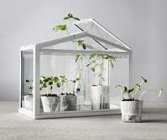 Socker Greenhouse | Best of The Ikea 2016 Collection | Mr Fox